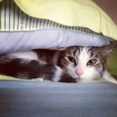Pillow Professor